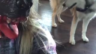 Dog Confused By Scary Mask - Video