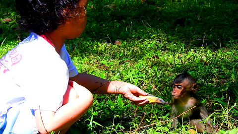 Korean Kid Give Banana To Baby Monkey Lori