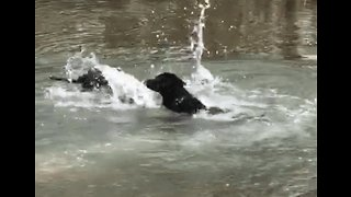 Puppy Doesn't Quite Have the Doggy Paddle Down