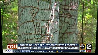 Forest of Hope project aims to shatter the stigma of recovery with deeply personal art project - Video