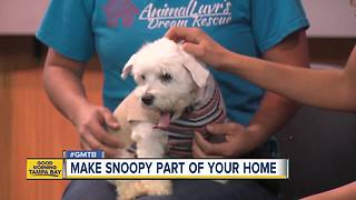 Rescues in Action: Snopy - Video