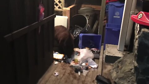 Man shoes off bear eating his garbage