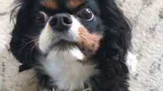 Dog Faces Off Against Chew Toy With Intense Stare - Video