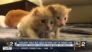 Harford County community nurses kittens back to health