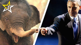 Obama Administration Passes New Rule Under Endangered Species Act That May Just Save Elephants - Video
