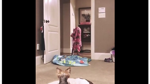 Epic fail: Toddler spoils dog's 'What The Fluff' challenge