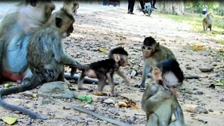 Mom Want Older Sister Monkey Take Care Baby, Don't Make Baby Cry - Video