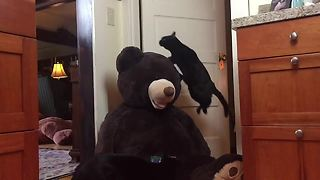 Jumping kitty in slow motion leaps over stuffed animal - Video