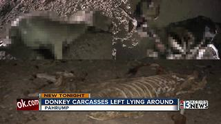 Donkey carcasses left lying around - Video