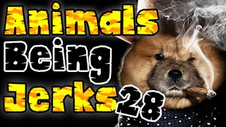 Animals Being Jerks #28 - Video