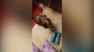 Curiousity Trapped The Cat - Video