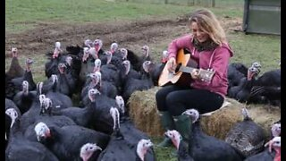 The 'Turkey Whisperer' who lives in Wales