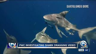 Outrage expressed over video showing boaters dragging shark - Video