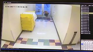RAW VIDEO - Bakersfield Heart Hospital shooting suspect leaving hospital