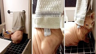 Not meow! Cat petrified of taking a bath hides away behind towel rack - Video
