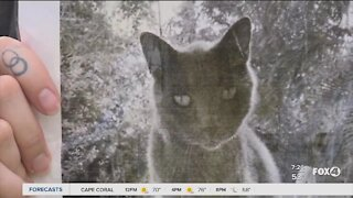 Eight year old helps woman finds missing cat