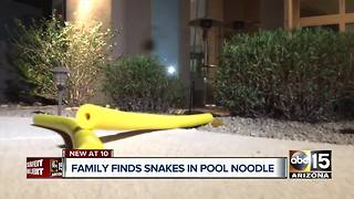 Buckeye family reports finding rattlesnakes inside pool noodle - Video