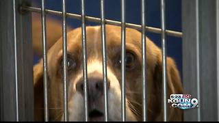 PACC offering free adoptions this weekend to ease overcrowding - Video