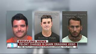 FWC charges 3 Manatee Co. men in connection to viral shark dragging video - Video