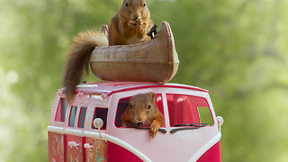 Squirrels and the car - Video