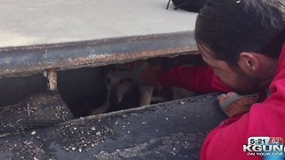Police rescue dog from storm drain near Broadway and Craycroft