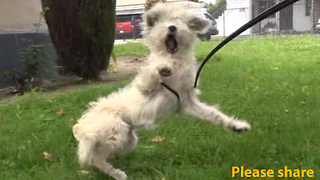 This dog was surprised when we showed up to rescue him! - Video