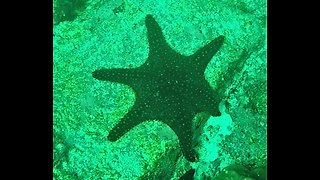 Scientists find mutated starfish with six arms in Galapagos Islands