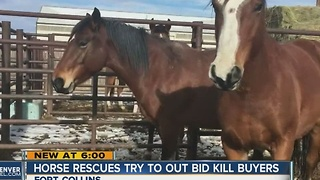 Horse rescue group tries to outbid 'kill buyers' - Video