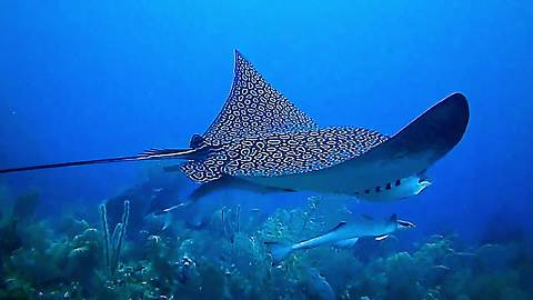 Diver nearly misses once in a lifetime encounter