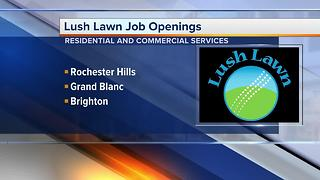 Workers Wanted: Lush Lawn job openings - Video