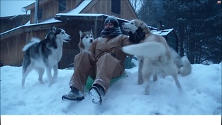 Man Goes Sledding With Seven Happy Huskies - Video