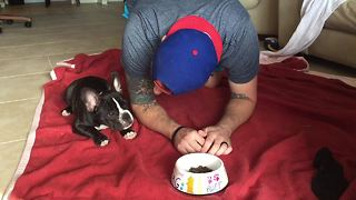 French Bulldog puppy prays before eating - Video