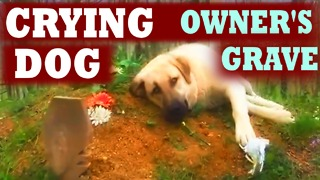 Dog is Crying at His Owner's Grave Every Day - Video