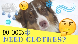 Do Dogs Need Clothes? - Video