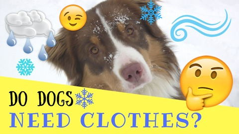 Do Dogs Need Clothes?