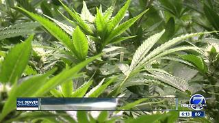 Veterans question medical marijuana resgulations - Video