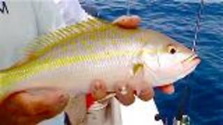 Catching the Yellowtail Snapper Frenzy - Video