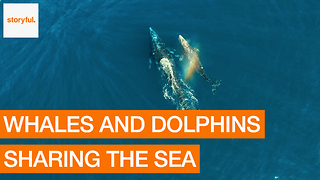 Drone Captures Whales and Dolphins Off Pacific Coast - Video