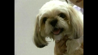 Stressed-Out Dog Massage - Video