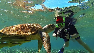 One-eyed sea turtle becomes local legend - Video