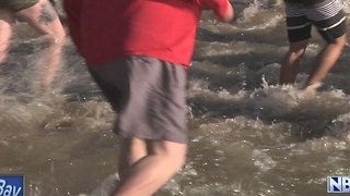 Hundreds participate in Polar Plunge - Video