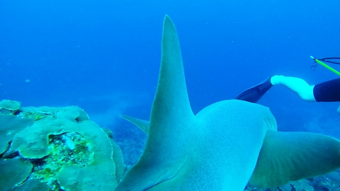 Shark swims under diver to photobomb moray eel video