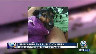 Educating the public about bees after dog attacked - Video