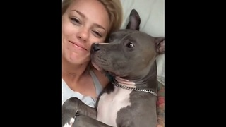Sweet Pit Bull Gives Kisses After Waking Up  - Video