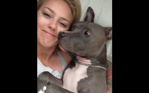 Pit Bull gives kisses after waking from deep sleep