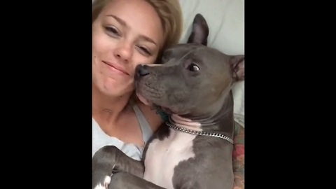 Pit Bull Gives Kisses After Waking Up From Deep Sleep