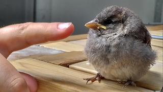 Family documents inspiring baby sparrow rescue