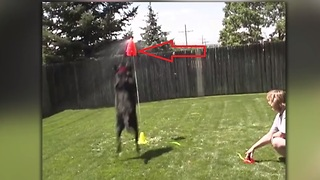 Dog learns to fetch something that's guaranteed to make you laugh!