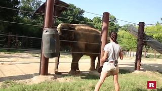 How to train an Elephant | Rare Animals - Video