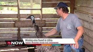 Emu went missing from Lithia property, found days later - Video